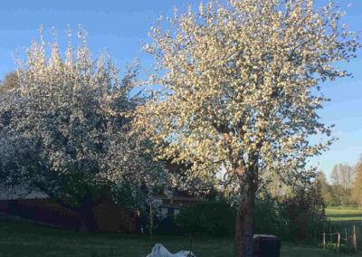 Alte Apfelbäume - Galerie