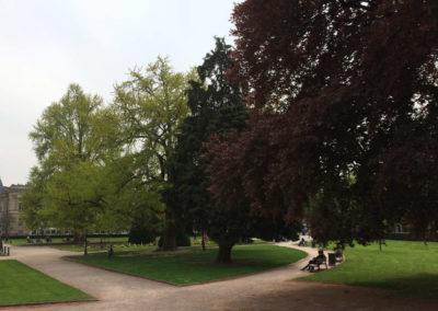 Gepflegte Parkbäume