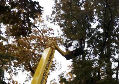 Hubsteiger Totholzentfernung